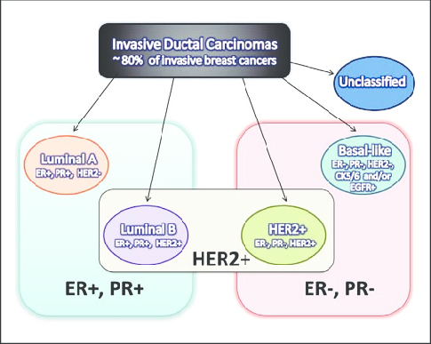 Schematic-illustrating-various-breast-cancer-subtypes-The-blue-and-pink-rectangles.png