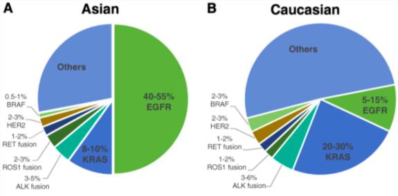 Living Longer: Stage 4 Lung Adenocarcinoma EGFR Mutationpositive